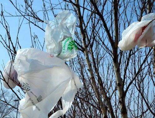 Cash and carry: the missed opportunities of England's plastic bag charge